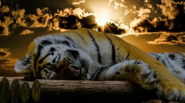 3 Tiresome 'Good Night' GIF images to send out at sunset